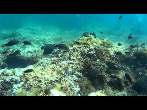 Diving monastir tunisia 30-06-2015 sjcam sj4000