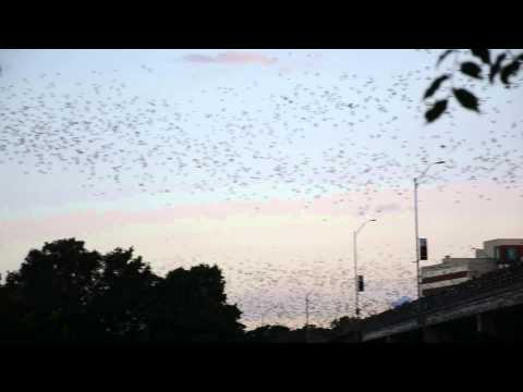Bat Fest - Austin, Texas - 23 Aug 2014