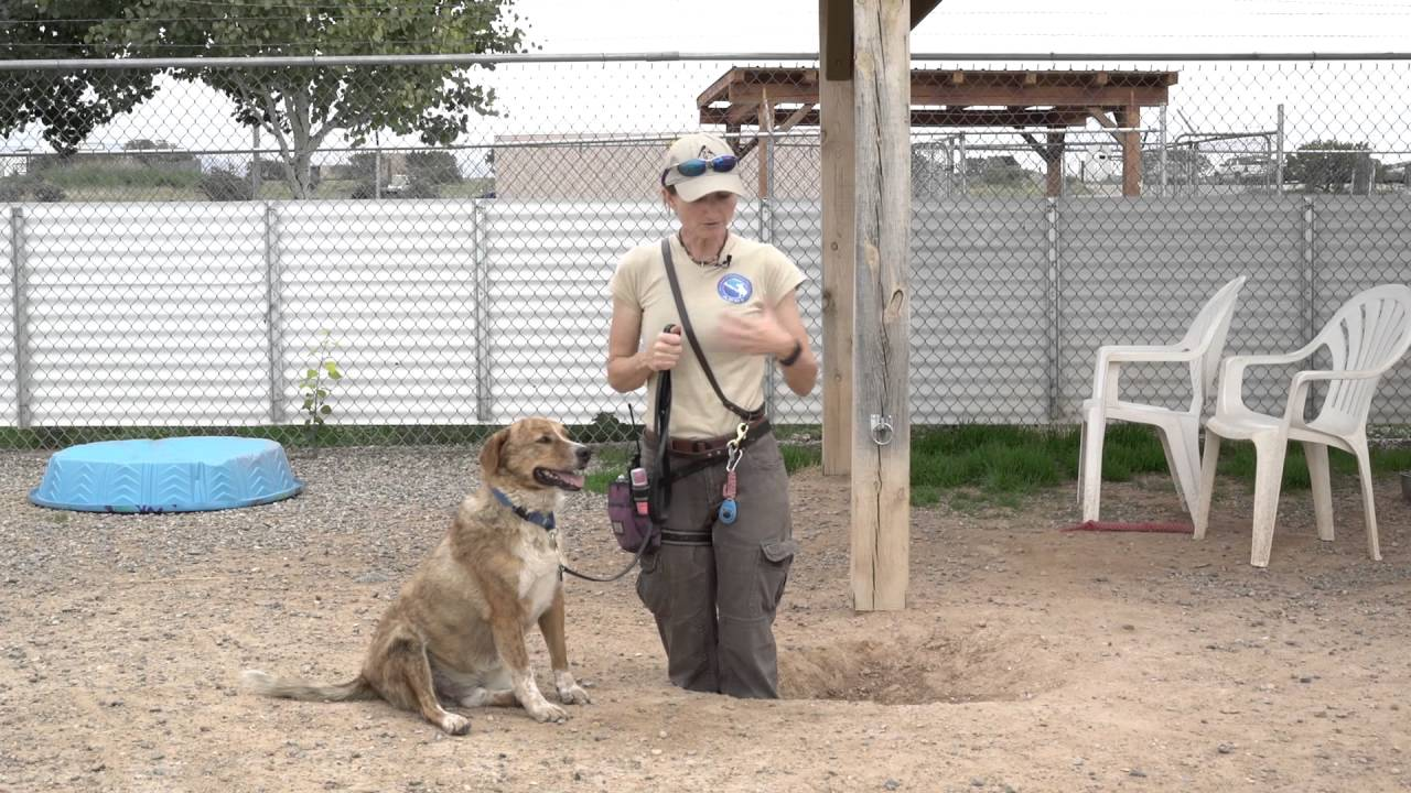 How to Teach a Dog to Dig foto