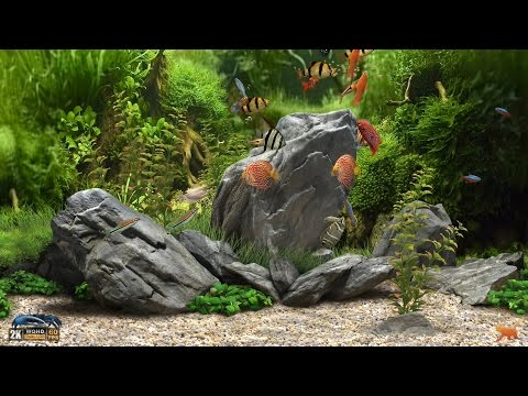 ★ Dream Aquarium ★ UHD Screensaver ★ 10 FishTanks ★ 60fps ★