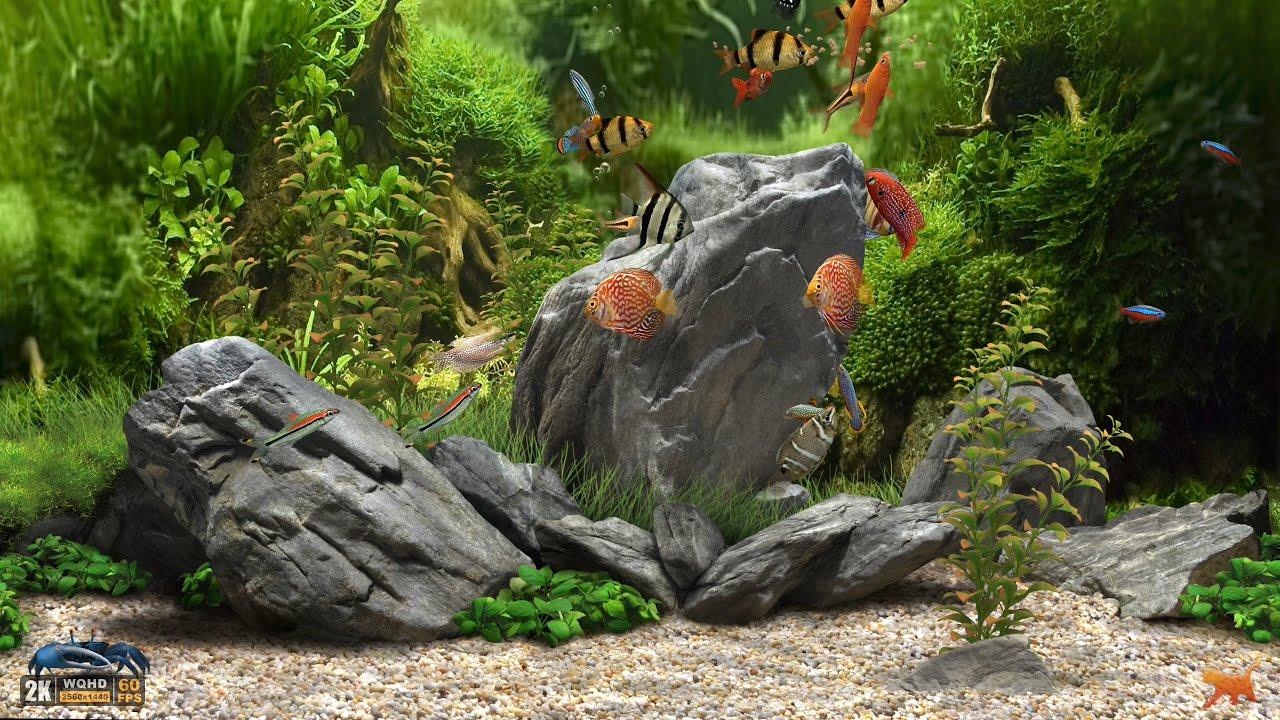 Virtual fish tank aquarium google -  Dream Aquarium 2k Screensaver 10 Fishtanks Wqhd 60fps Youtube