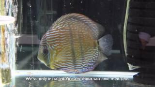 TWINSTAR YOTTA Wild discus - Prevention of fish diseases
