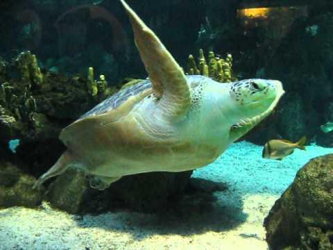 L 39 acquario di genova la tartaruga gigante youtube for Tartaruga da acquario