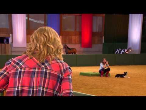 Flockstars | ITV