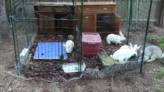 Cheap Rabbit Hutches for Survival Preparedness