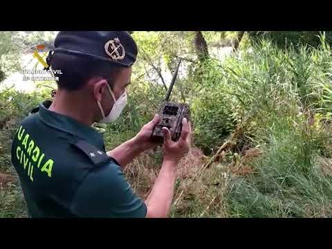 Finaliza el dispositivo de búsqueda del cocodrilo en las aguas del Pisuerga