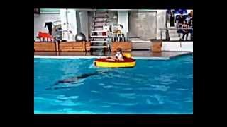 Как проходит шоу с дельфинами в Челнах