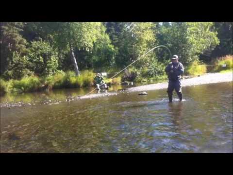 Pesca de Salmon sockeye en el  Russian river, Alaska