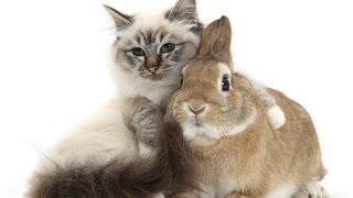 Лучшие ПРИКОЛЫ 2017! В мире животных! ч.2 Только юмор и позитив!!!