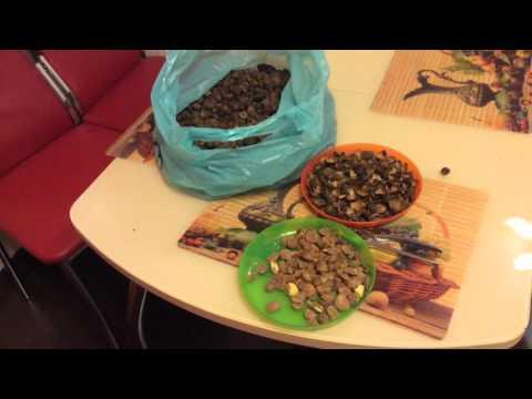 Очистка семян Камелии для экстракции углекислым газом