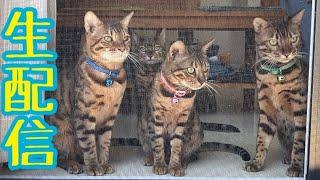 【ランチ生配信4/20】ポカポカ日和のこんな日は猫でも見て過ごしませんか?生配信