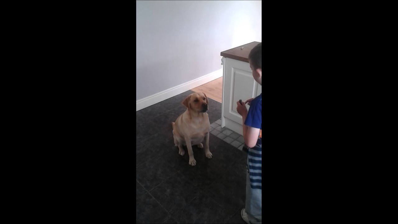 DOG DOING TRICK'S FOR 7 YEAR OLD.