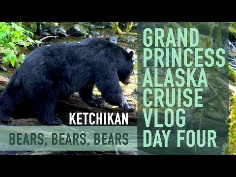 Alaska Cruise Vlog - Day 4 Ketchikan Bears