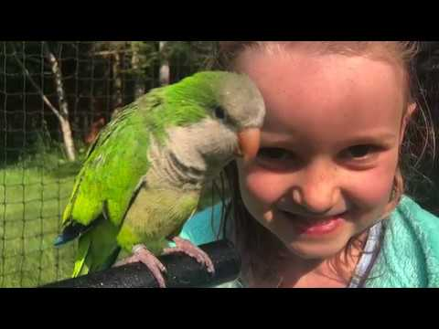 How My 6yr Old Tamed This Quaker Parrot (Without Me Knowing!)
