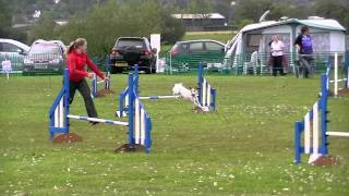 "Milo's first clear at AJAX Agility 10th Sept 2011 Buy ""The Twins"" B..."