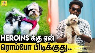 AC இல்லாம இருக்காது இருந்தாலும் Low Maintenance தான்!   All about Dogs : Episode 5   SHIH TZU