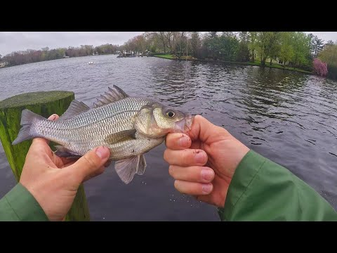 WHITE PERCH Fishing The Mays Landing BULKHEAD! (in The Rain)