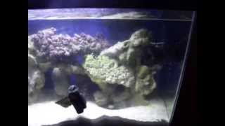 30 Gallon Fowlr Saltwater Tank For Sale