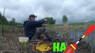 Ловля карася на поплавок в мае 2020 Рыбалка весной Небольшой КАРАСЬ на ЗАСОЛКУ