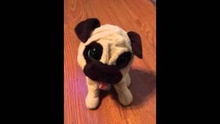 Jj My Jumping Pug