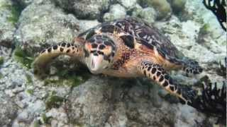 mexico akumal beach resort fantastic turtle shots