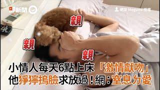 林口紅貴賓犬每天6點上床激情獻吻 狗主人摀臉求放過 網友:小情人窒息的愛|寵物