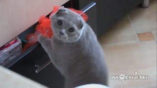 Приколы с котами) Самое смешное видео)) Стоит посмотреть.(Милые и забавные коты), 2016-03-08T12:38:08.000Z)