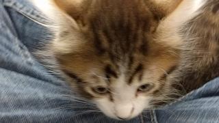 Kitten Close Up 2017-05-07... Take Two? thumbnail