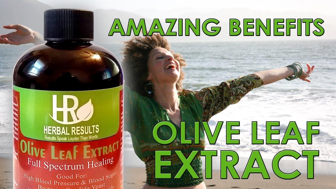 how much olive leaf extract should i take | Jidileaf co