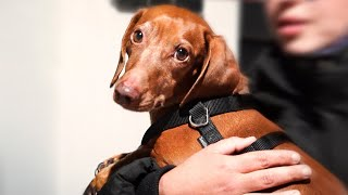 Dog reunited with his family after 2 years stuck in another country!