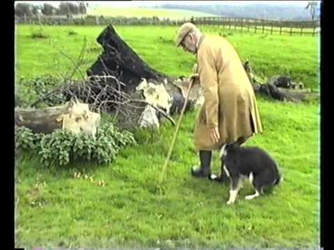 Sheepdog Training With Ted Hope Pt 2