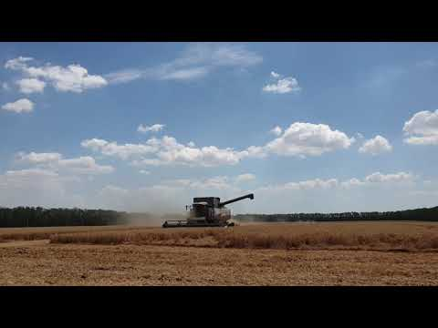 Дополнительные центнеры на озимой пшенице! Как получить?