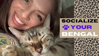 How to Socialize a Bengal Cat