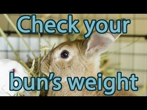 Is Your Rabbit the Right Weight? | Bunny Basics