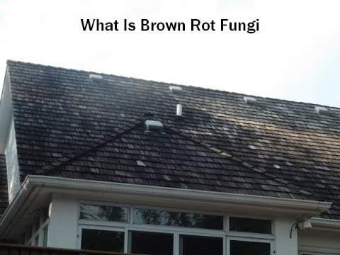 Cedar Roof Cleaning Removing White Amp Brown Rot Fungi