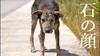 保護された後も心を閉ざす犬。心が通い合ったとき「石の顔」から世界で一番輝く笑顔へ