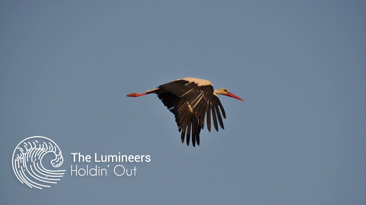 the-lumineers-holdin-out-storks-soundtrack-the-secret-ocean