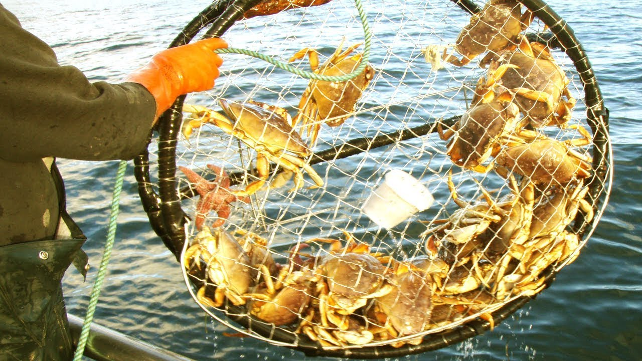 Soft Shell Crab - Mud Crab Farm Business Plan with Fattening System in Pond