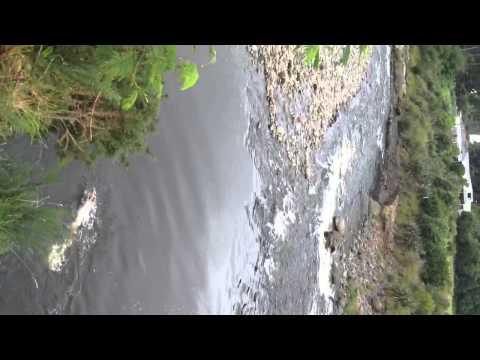 Telecom water hole NP NZ