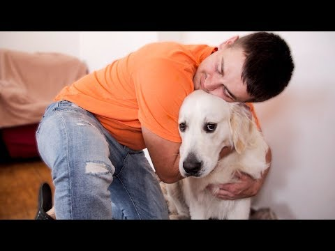 I Hug My Golden Retriever Many Times - Hugging My Dog for too Long