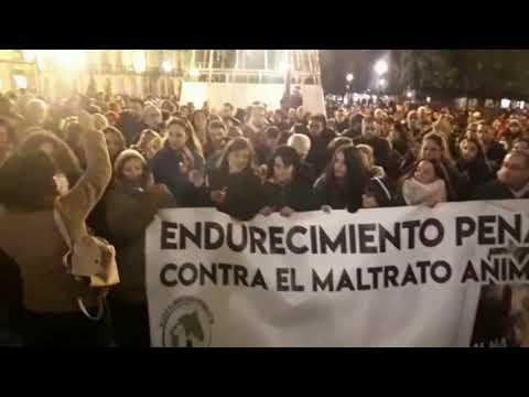 Lugo pide justicia para Alma, la perra tiroteada en Chantada