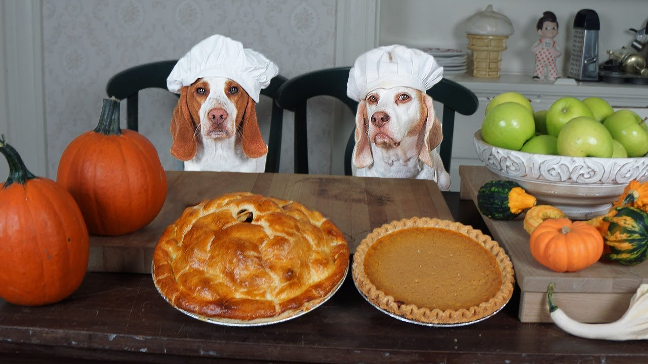 chef-dogs-make-pies-funny-dogs-maymo-potpie