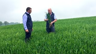 CROPS WATCH: Winter barley is showing excellent potential
