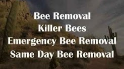 Scottsdale and Paradise Valley Pest Control Services | A Bee Pest Pro
