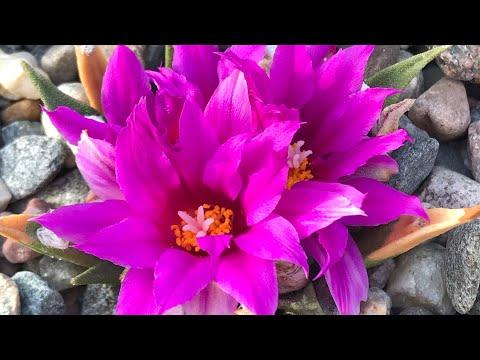 В погоне за редкими растениями или откуда берутся шедевры