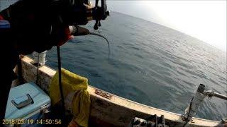 2018/3/19 船釣試錄巧遇紅斑|船釣|敲底|赤點石斑|