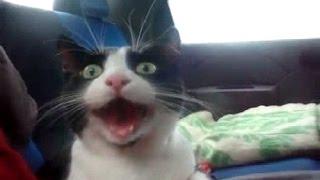 Говорящие коты на ютубе ! Смотреть обязательно!