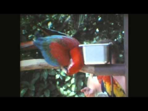 Parrot Jungle – Florida 8mm cine 1980