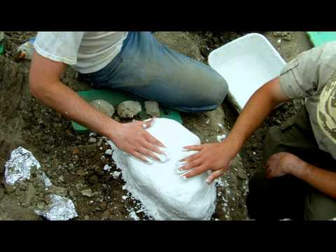 Field Jacketing A Hadrosaur Skull Bone (With Audio Explanation)