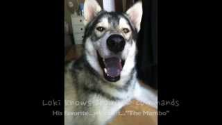 """Winner""  2013 Holiday Pet Video Contest ""The Loki Mambo Christmas Dance Celebration"""